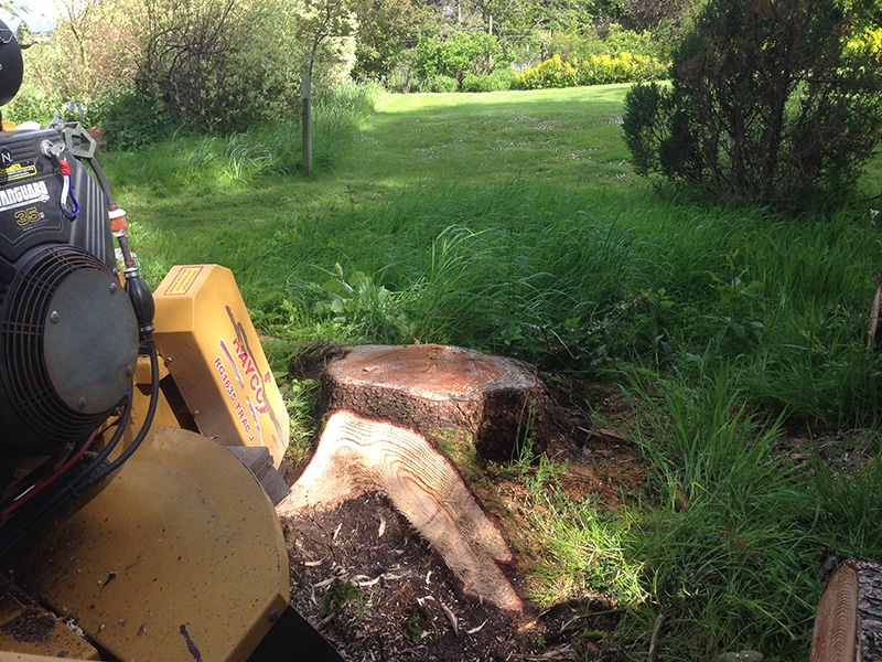 Tree Surgeons in Stirling Tree Removal