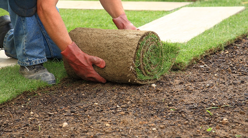 Landscaping in Stirling Planting Grass